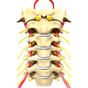 compressão nervo na cervical provoca túnel cárpico